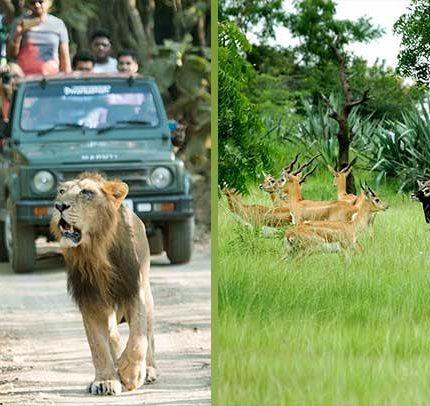 WILDLIFE-SAFARI-IN-GUJARAT